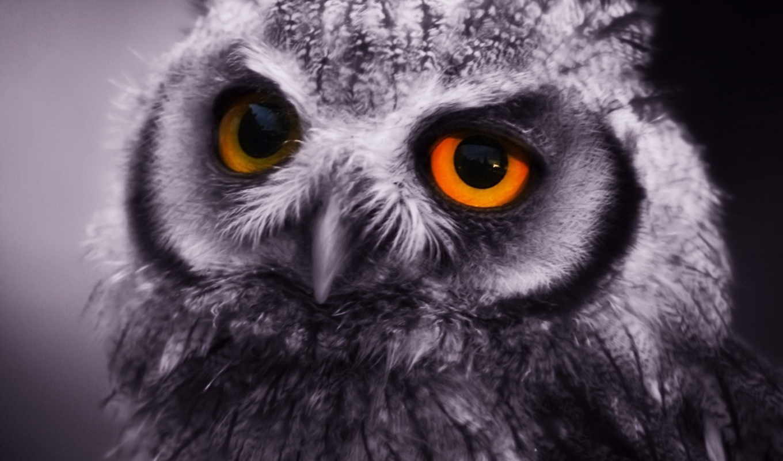 , сова, серая, глаза