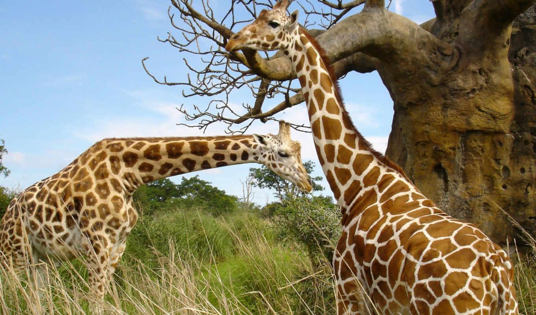 красивые, животные, животных,