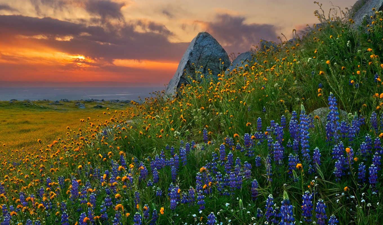 природа, цветы, klassika, люпин, горы, цитатник,