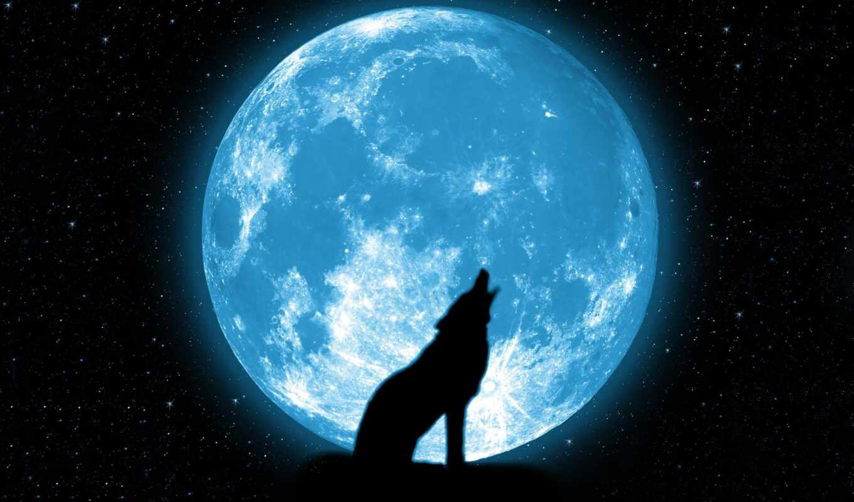 волк, луна, луну, вой, волки, воет, красиво, красивые, звезды,