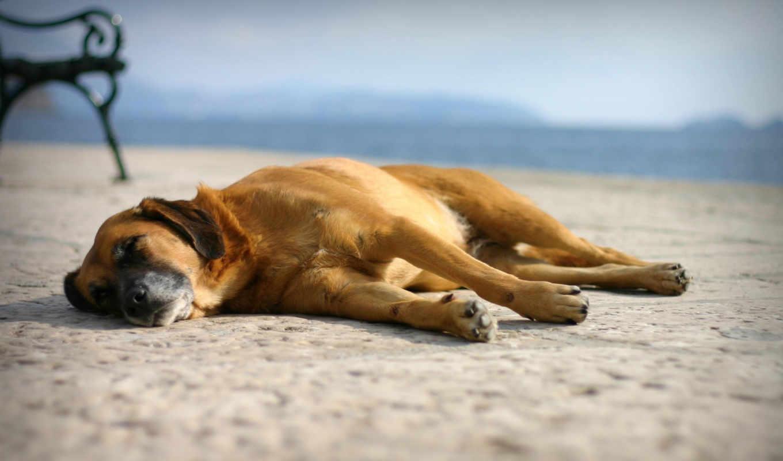 ночи, спокойной, ночь, море, пляж,