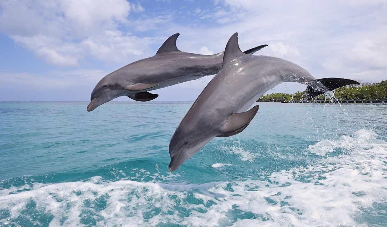 Обои дельфины. Животные foto 11