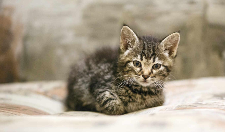 small, котенок, zhivotnye, июня, категории, монстрик,