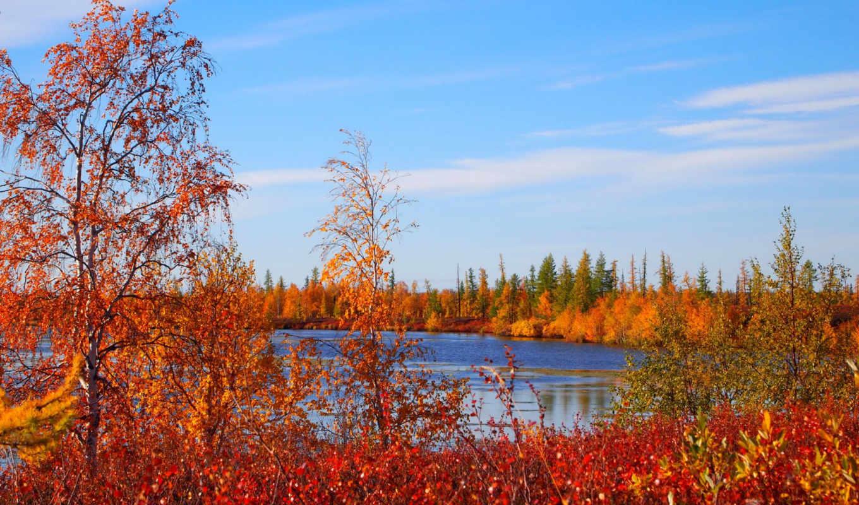 светик, каждой, расцветаю, again, картинка, природа, осенью, красивые,