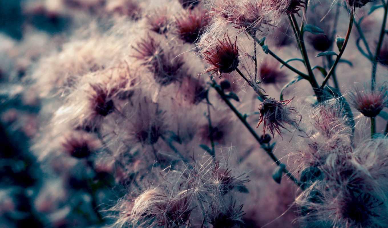 природа, цветы, макро, растения,