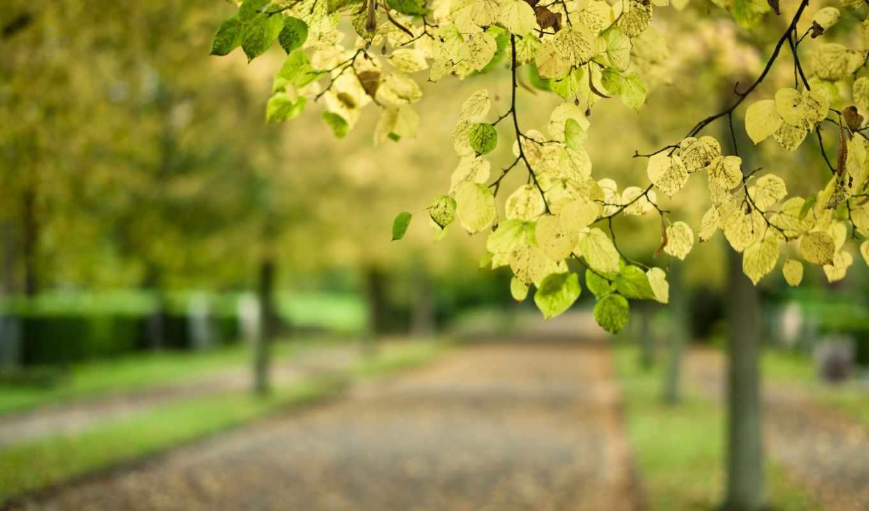 ветка, дерево, листья, макро, картинка,