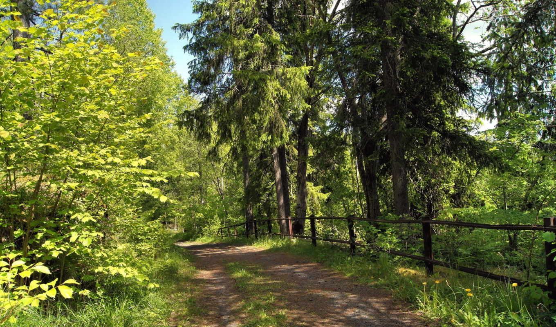 природа, дорога, лес, лето, картинку, кнопкой, ней, правой,