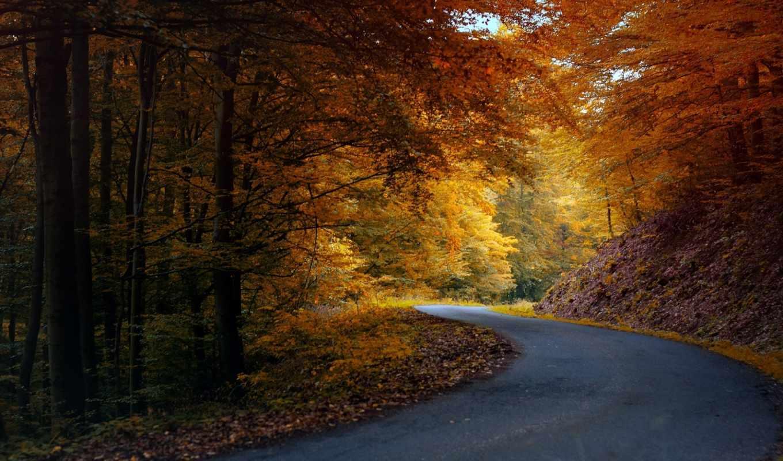 осень, природа, дорога, деревья, лес, листья, асфальт, дороги,