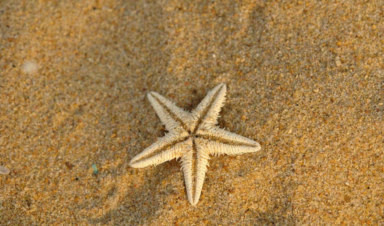 песок, море, купить,