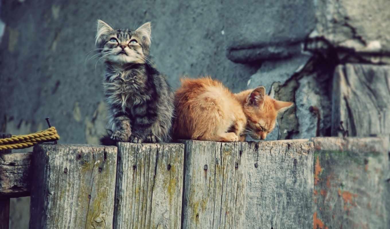 ,кошки,котики,забор,котята,