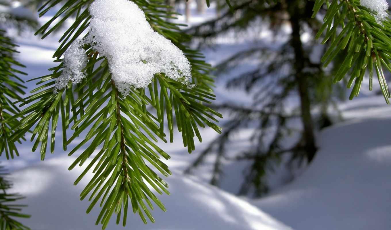 winter, снег, branch, рисунки, природа, красивые,