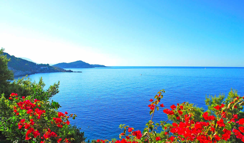 море, cvety, берег, tapety, flowers, darmowe, landscape, пляж,