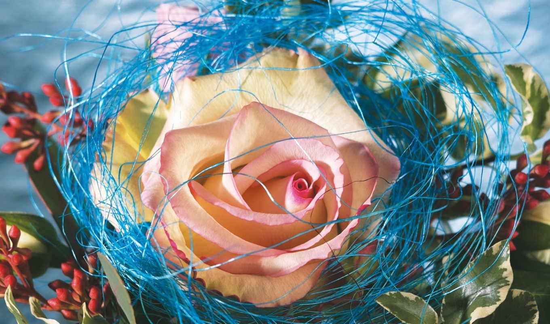 wallpaper, pl, днем, www, masatapet, flowers, роза, yassir, цветов, люблю, чтобы, цветы, general, this, rose,