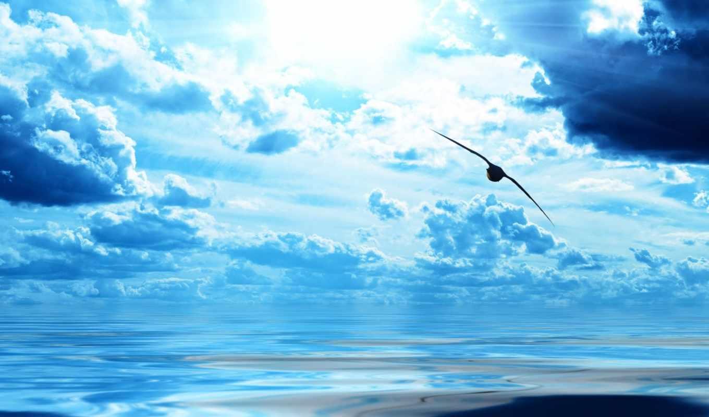 птица, небо, море, ocean, природа, water, облака, полет,