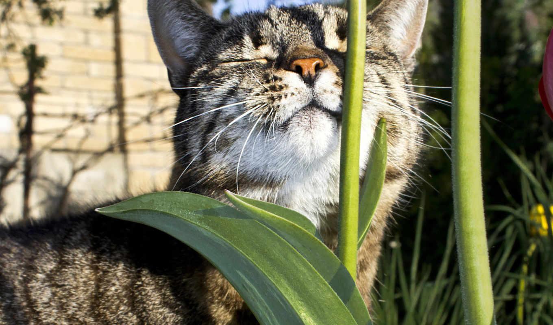 кот, лежит, животные, стебель, sun, греется, цветы, animal, года,