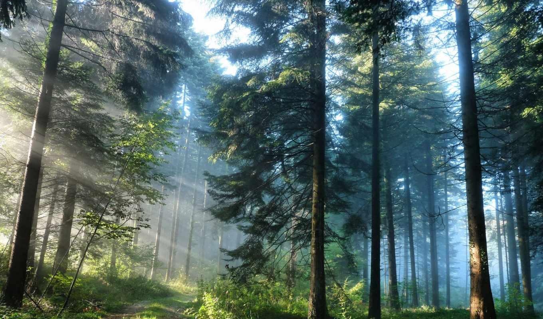 дорога, лес, природа, свет, лесу,