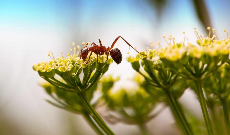 ant, красивые,