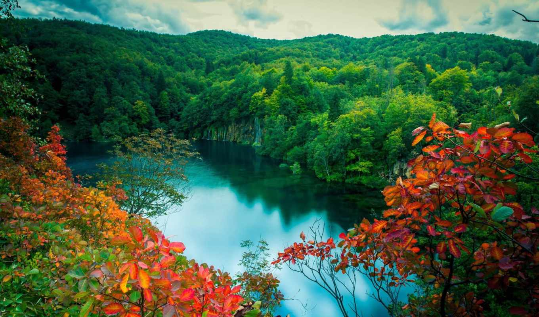 природа, озеро, лес, summer, картинка, trees,