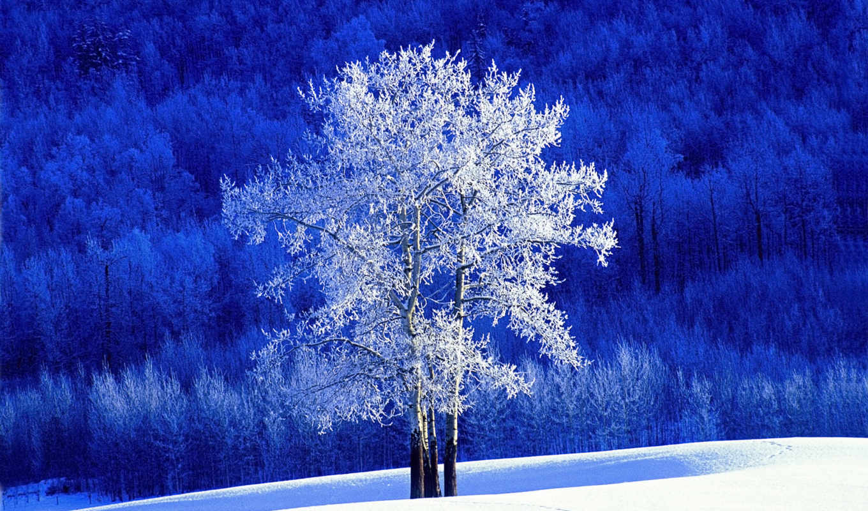 канада, columbia, british, knowledge, winter, national, park,