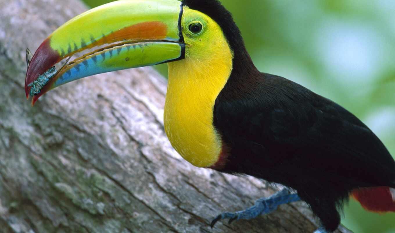 черная, птица, большим, клювом, птицы,