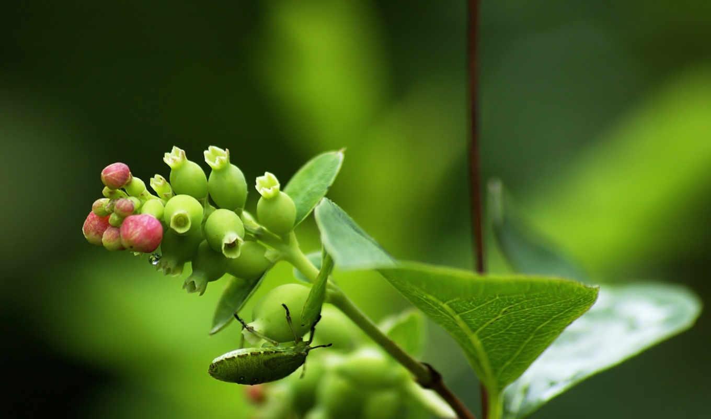que, nature, best, burlywood, yellowgreen, darkgray, free, dios, download, venezuela,