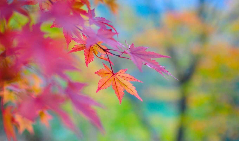 осень, тона, япония, природа,