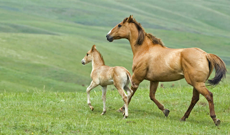 лошадь, жеребенок, horses, лошади, жеребен,