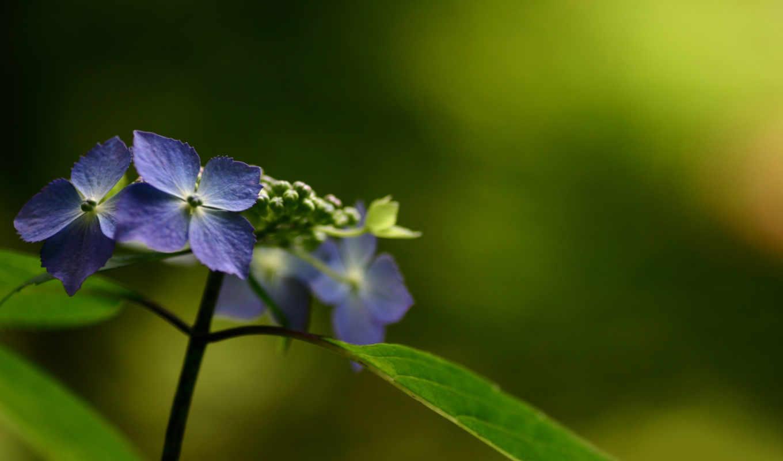 природа, макро, цветы,