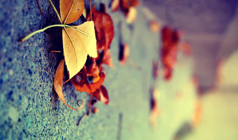 макро, листья, осень, желтые, вертикально,