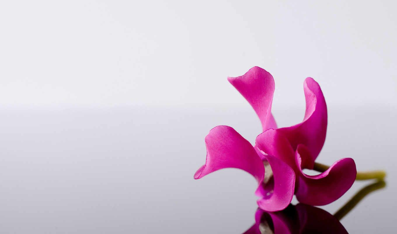 цветы, яркий, розовый, flowers, стеклянной, орхидеи, отражение,