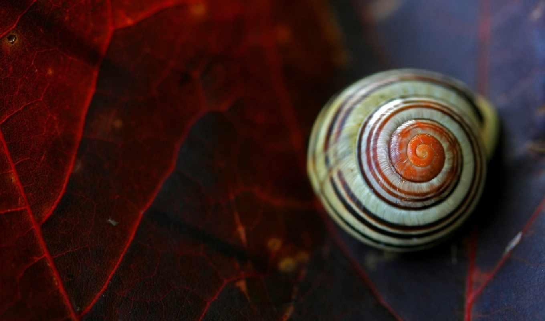 seashells, листок,