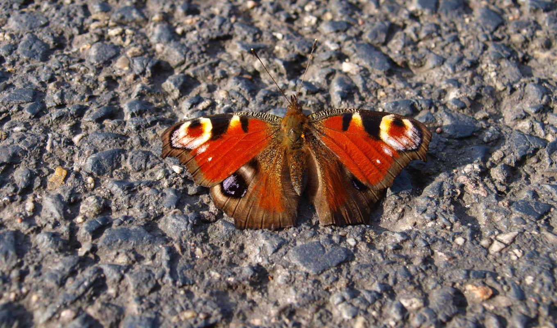 красивые, красивых, разделе, бабочка,