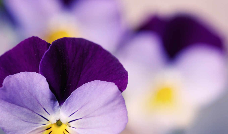 красивые, фотографий, makro, cvety,