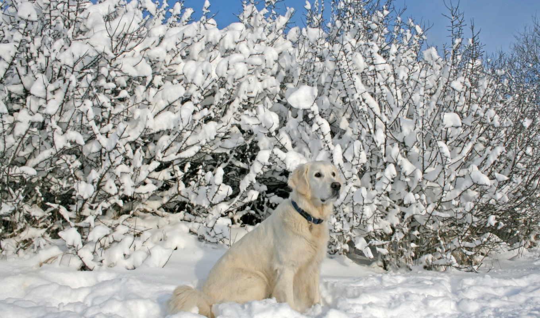 winter, собака, снег,