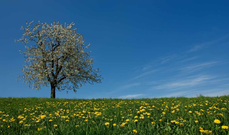 цветы, трава, луг, весна, небо, дерево, одуванчики, картинка,