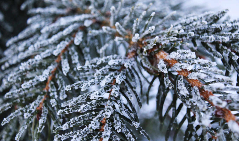 ёль, frozen, снег, winter, desktop, natur, иний,