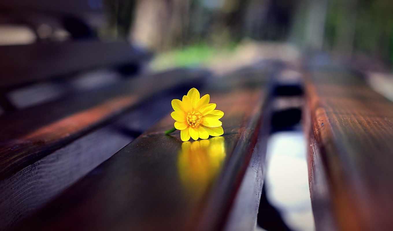 цветы, скамейке, скамейка, yellow, обоях,