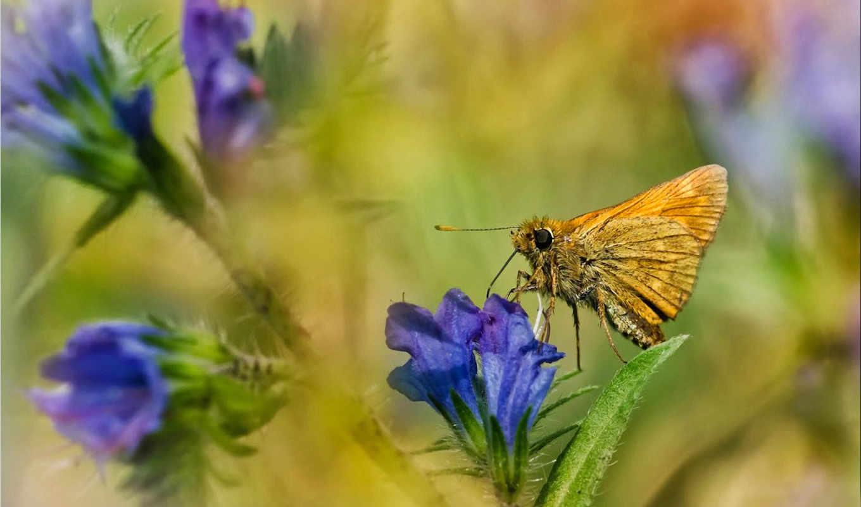 макро, цветы, разделе, бабочки,