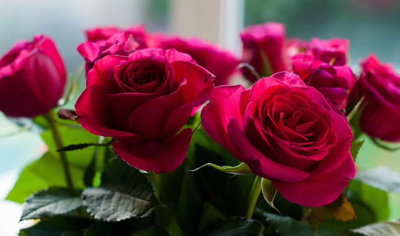 цветы, розы, букет,