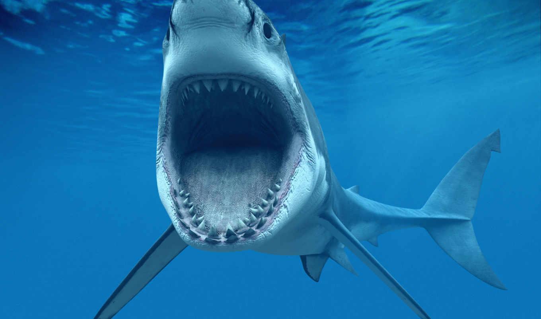 зарегистрируйте, войдите, акула, contact, море,