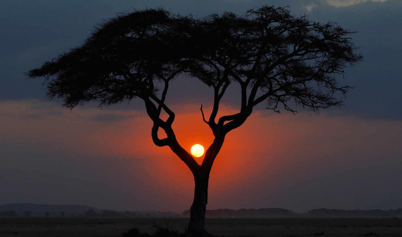 закат, landscape, африка, саванна, kenya, дерево, вечер,