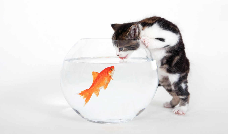 кот, funny, fish, cats, this,
