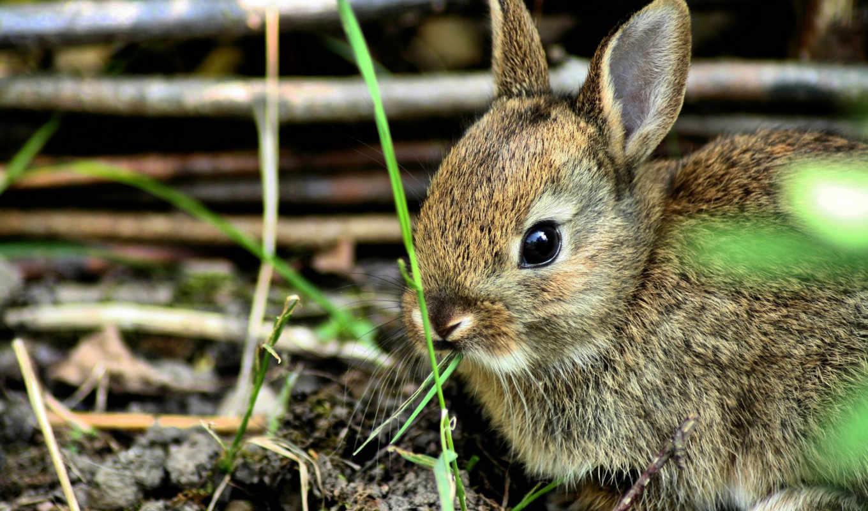 трава, name, последний, браун, кролик, заяц, small, parent, modified,