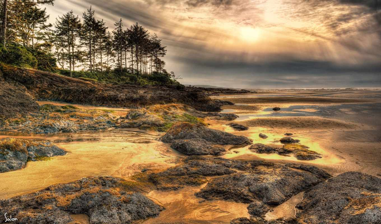 море, берег, trees, золотистый, закат,