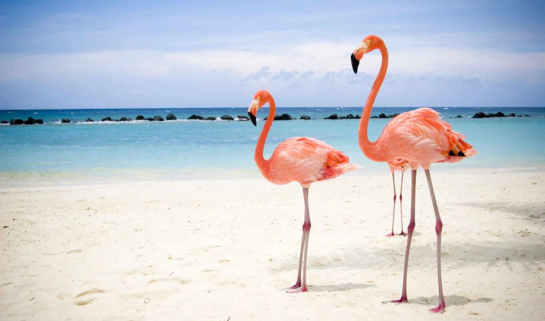 фламинго, два, beach, море, flamingos, птица,