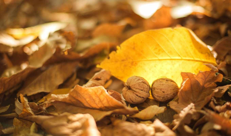 ,орехи,листья,осень,