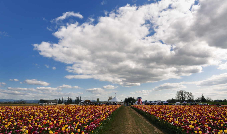 цветы, небо, тюльпаны, поля, много, природа, облака, обою, размере, истинном, смотреть,