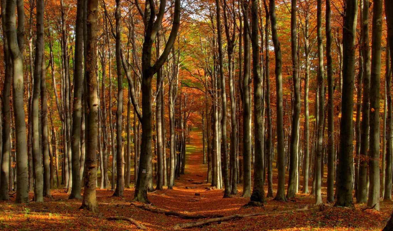 природа, леса, ручей, водопады, hotels, holidays, hotel, природы, kodaikanal,