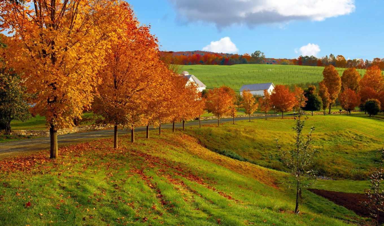 осень, природа, природы, фона, поле, дорога, водопад, browse, лес, небо,