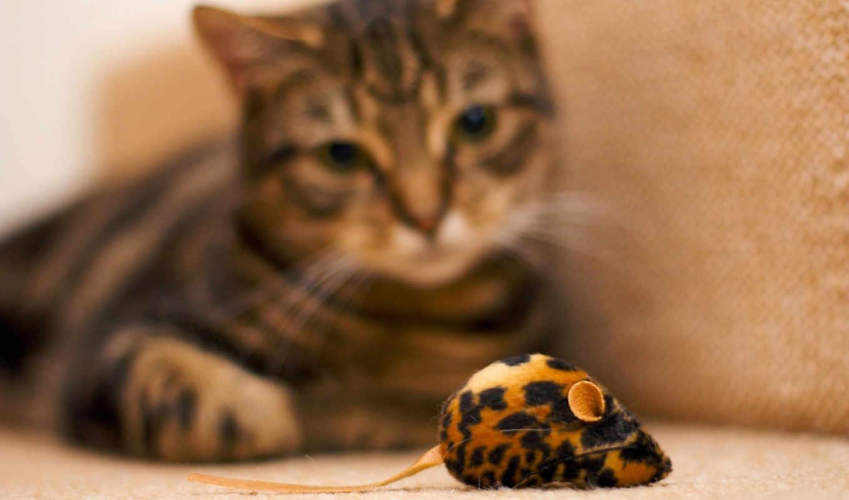 красивые, мыши, фотографий, загружено, уже, коллекция, лучшая, темы, макро, кошки,